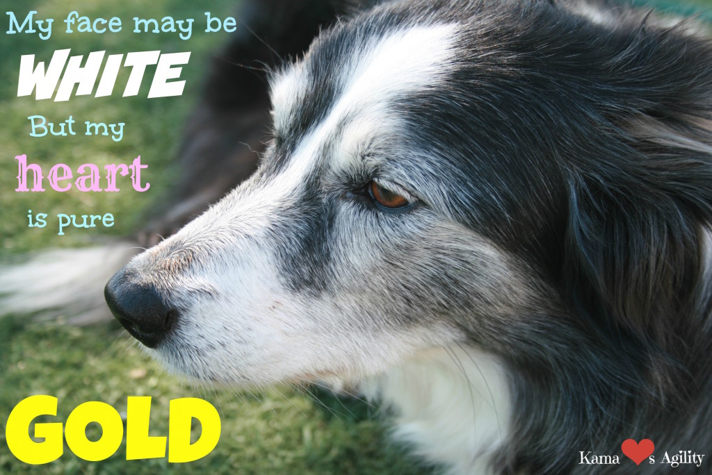Old Dogs are Gold - Treasure Them While You Have Them