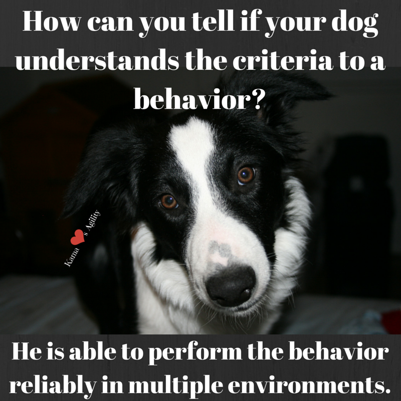 How can you tell if your dog understands criteria? | KamaLovesAgility.com